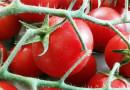 Il pomodoro di Pachino alla conquista della grande distribuzione