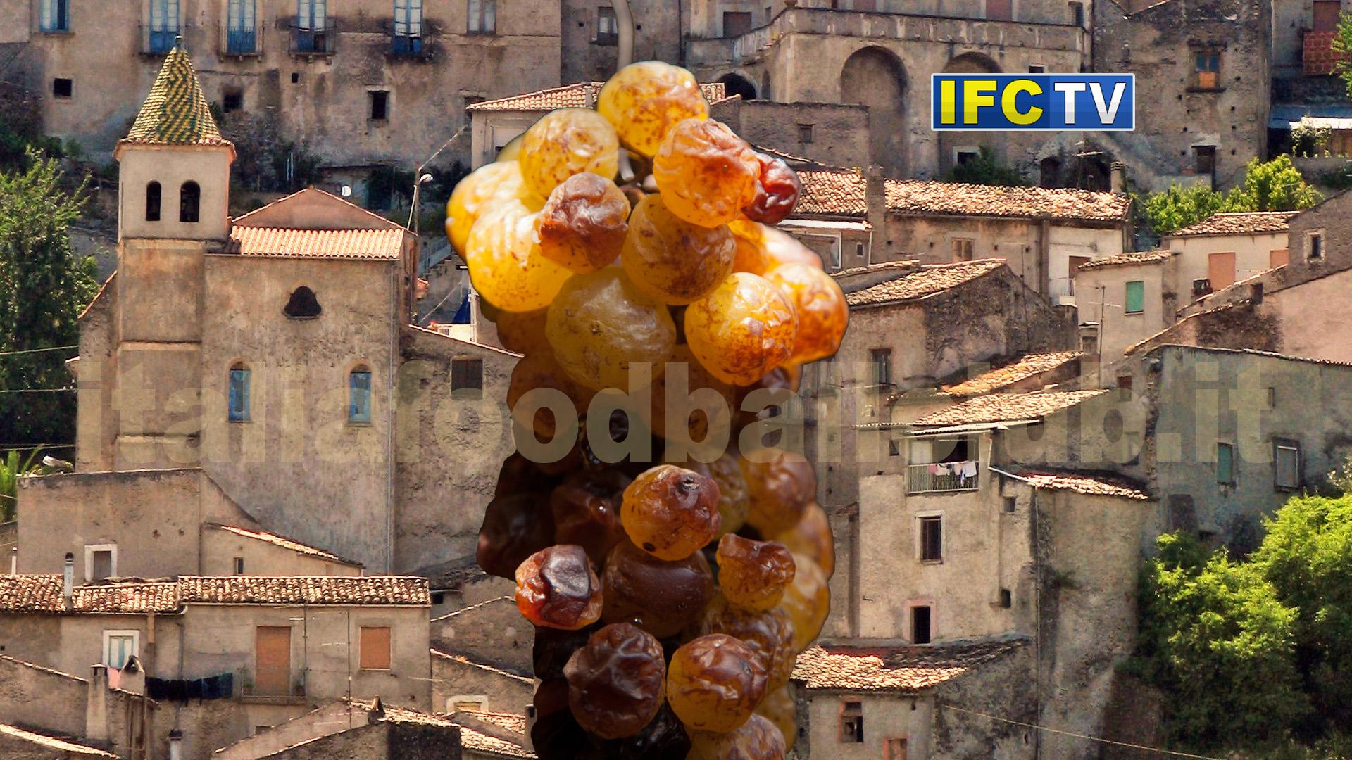 Moscato di Saracena, il dolce sapore della storia