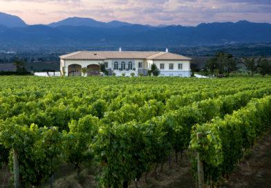 """Il vino biologico rappresenta un """"modo di essere"""""""