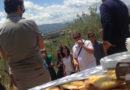 La valorizzazione dell'Umbria attraverso l'olio extra vergine d'oliva Dop