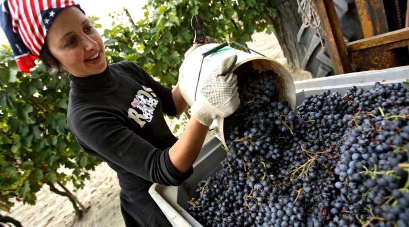 In Emilia Romagna vino e calcio vanno insieme