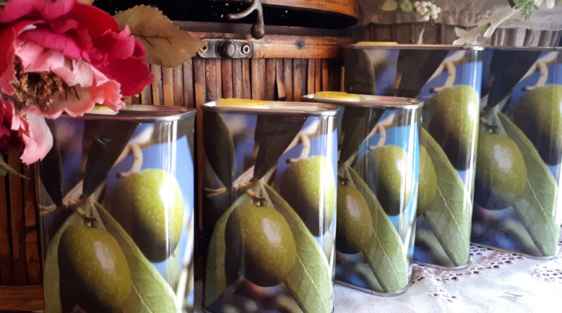 Sui Colli Euganei da secoli si coltivano ulivi